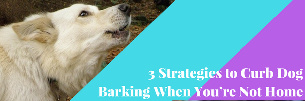 3 Great Strategies To Stop Your Dog Barking When You Re