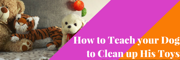 How to Teach your Dog to Clean up His Toys