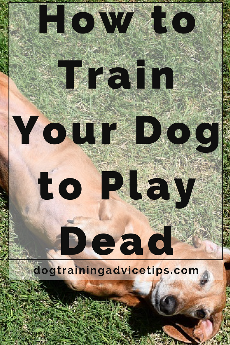 How To Clicker Train A Dog To Play Dead