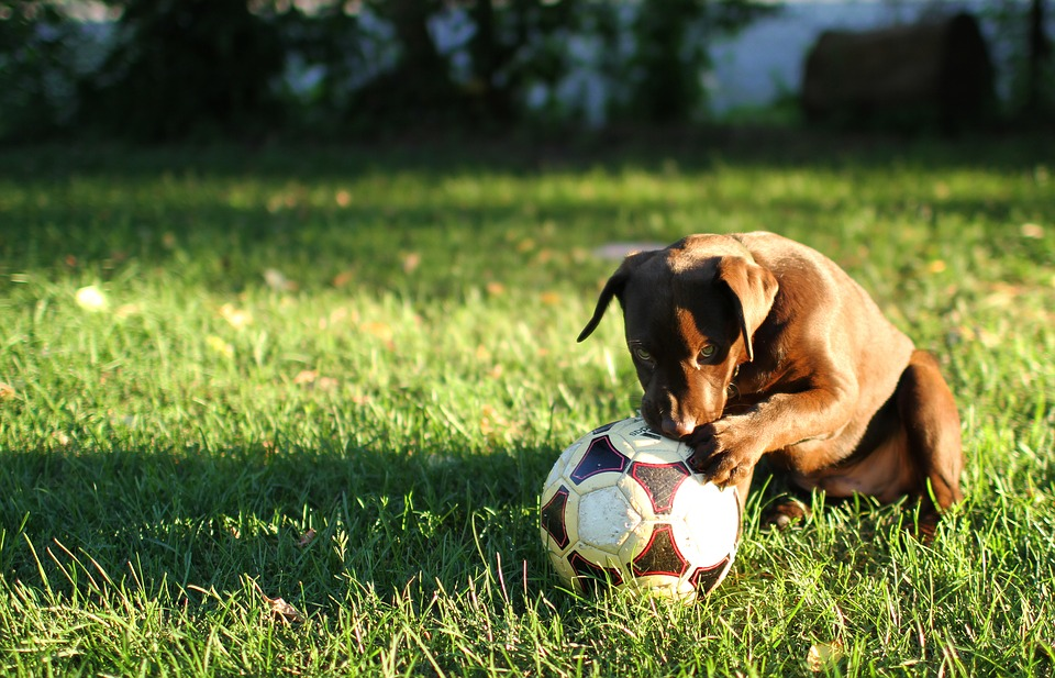 how to train your dog to give you the ball