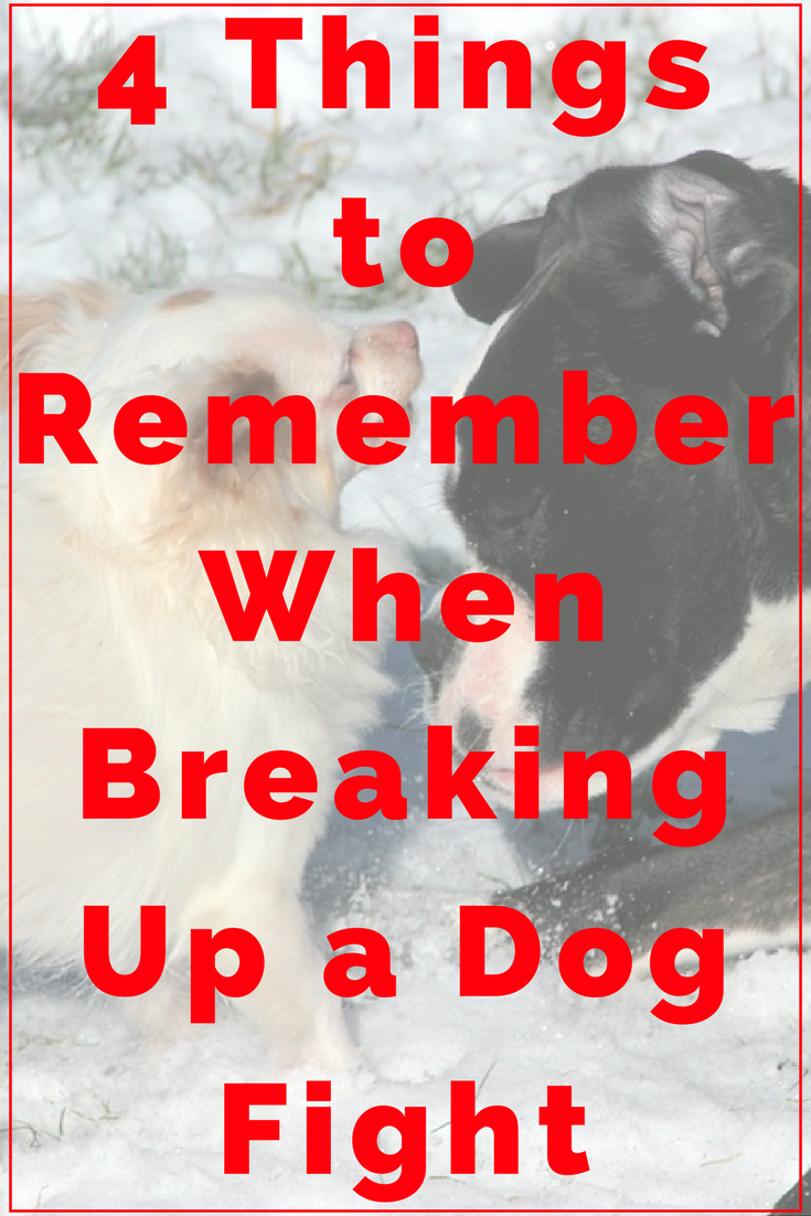 How to break up a dog fight peacefully