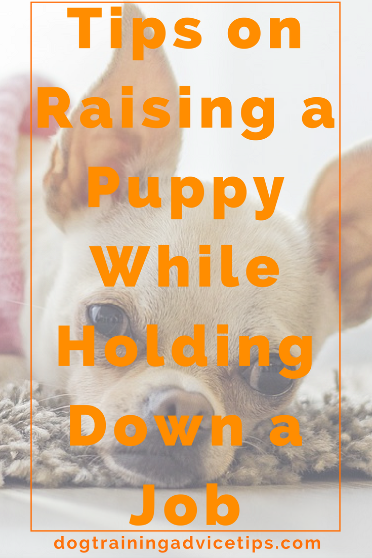How to raise a puppy while working