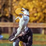 Confidence-Boosting Training Games for Abused Dogs
