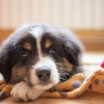 7 Ways to Train Calmness in your Dog