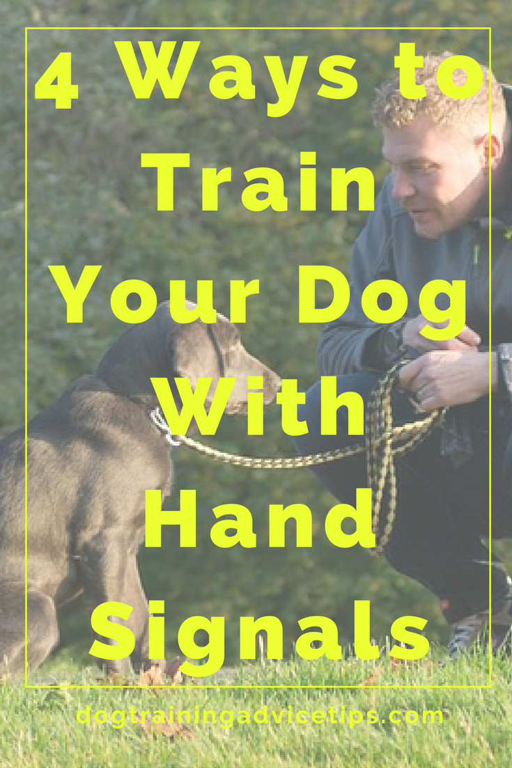 4 Ways to Train Your Dog With Hand Signals