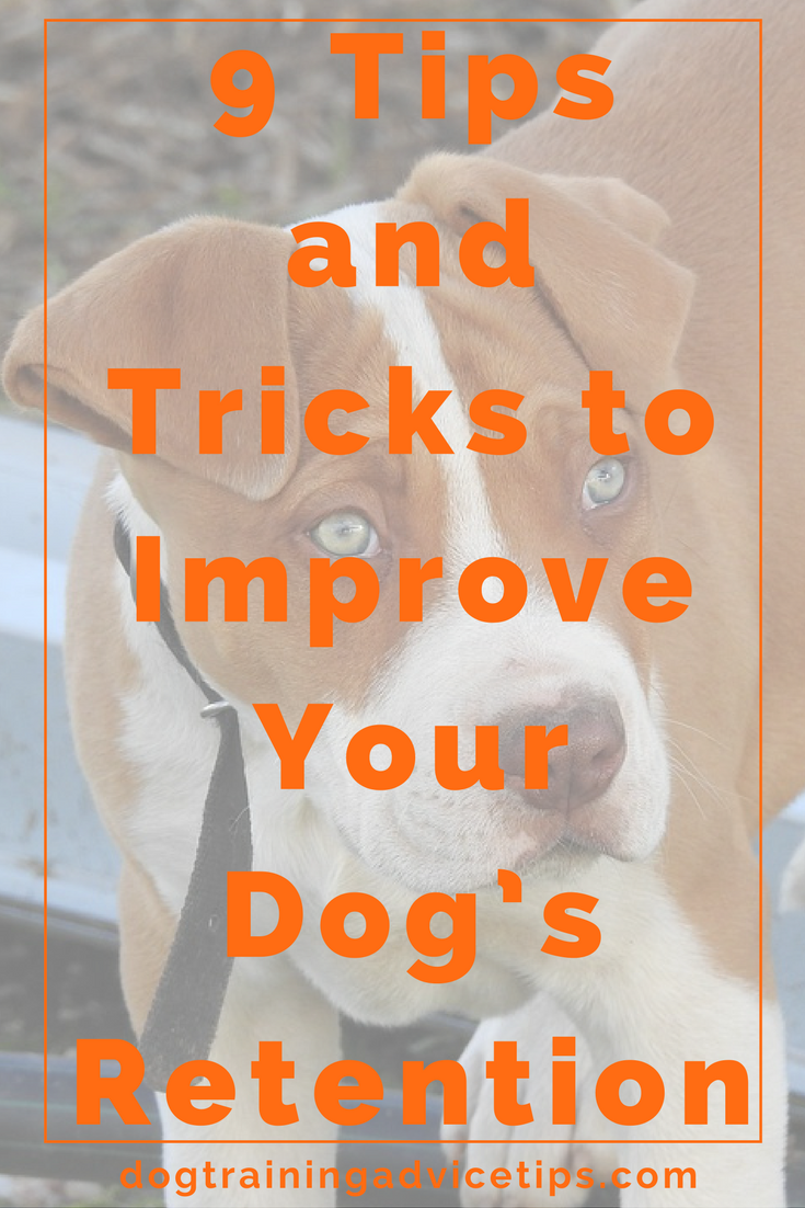 How to improve your dog's retention