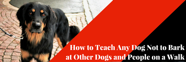 how to train dog not to bark at other dogs