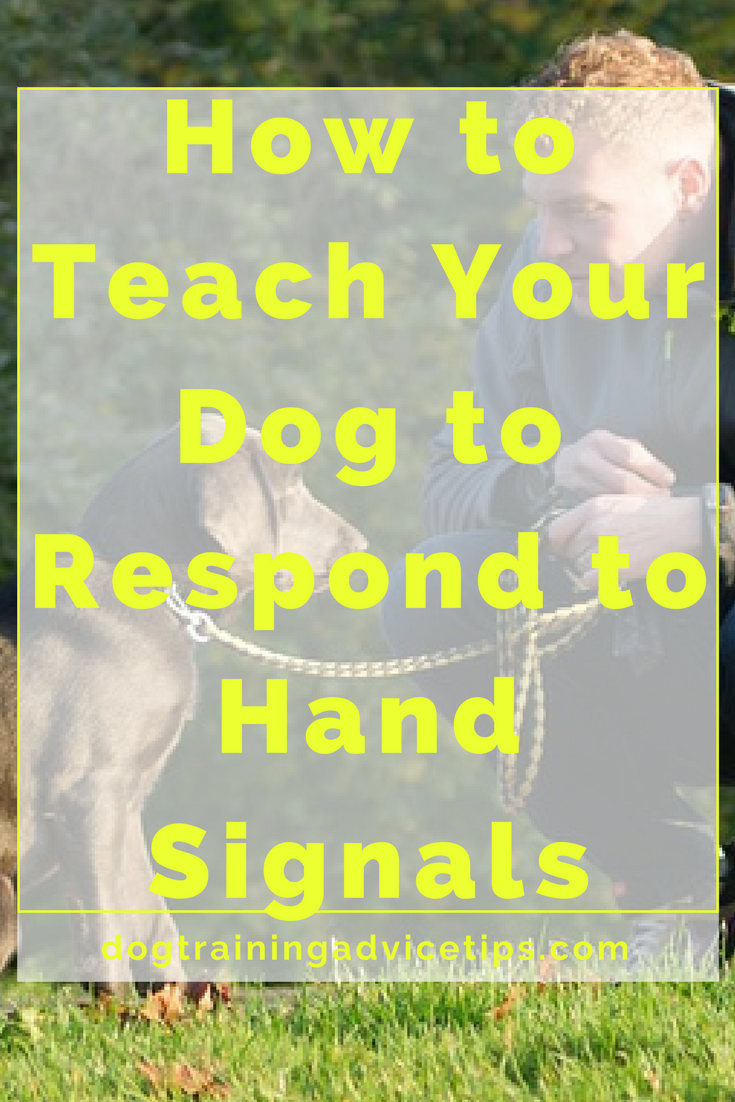hand signs for dogs