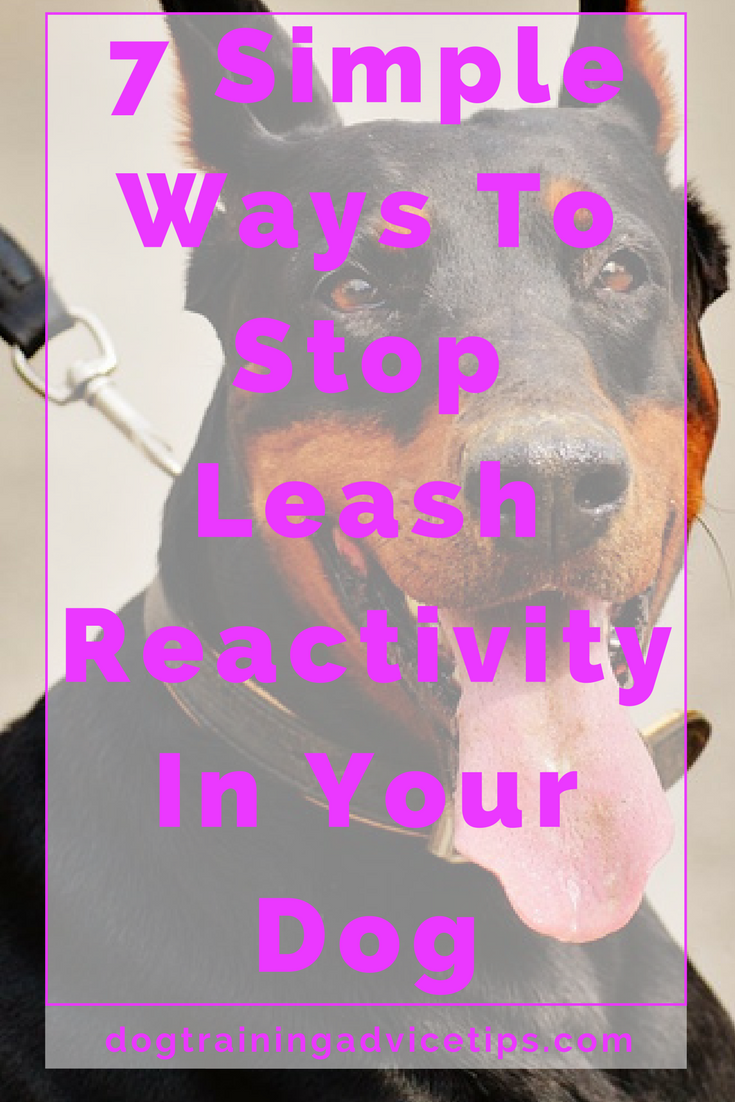 How To Train A Dog With Leash Aggression