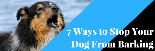 7 Ways To Stop Your Dog From Barking Dog Training Advice