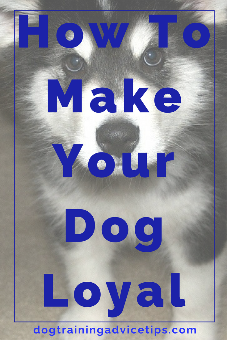 Turning Your Dog into a Loyal Companion