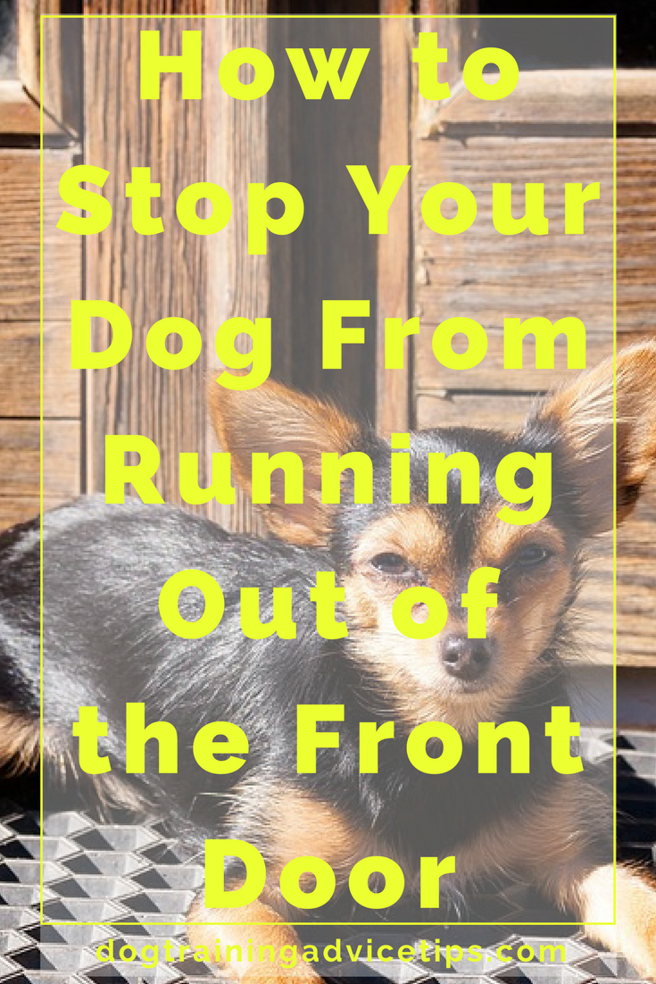 Prevent Dog from Dashing Out of the Front Door