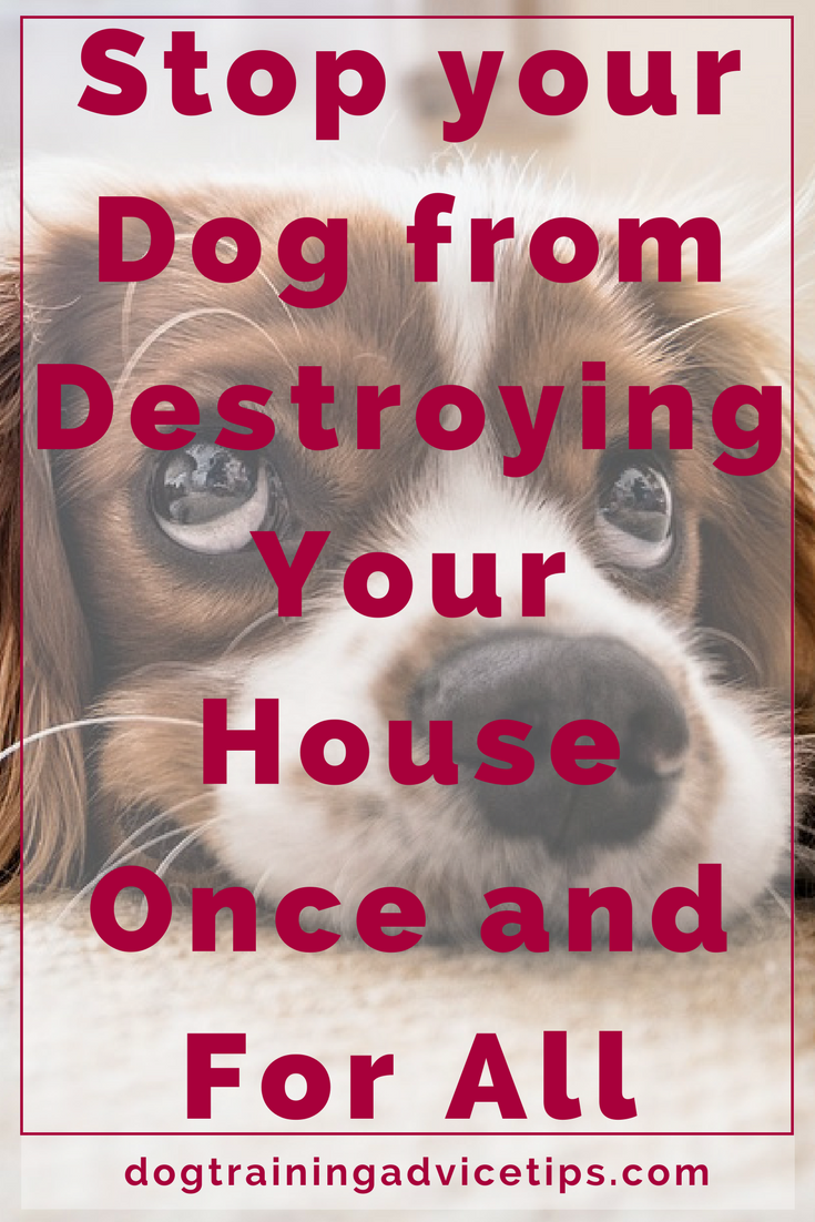 How to stop your dog destructive behaviors