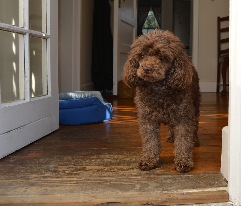 How to Potty Train Your New Puppy in a Week