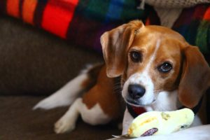 Stop Your Dog's Destructive Chewing with These 5 Tips