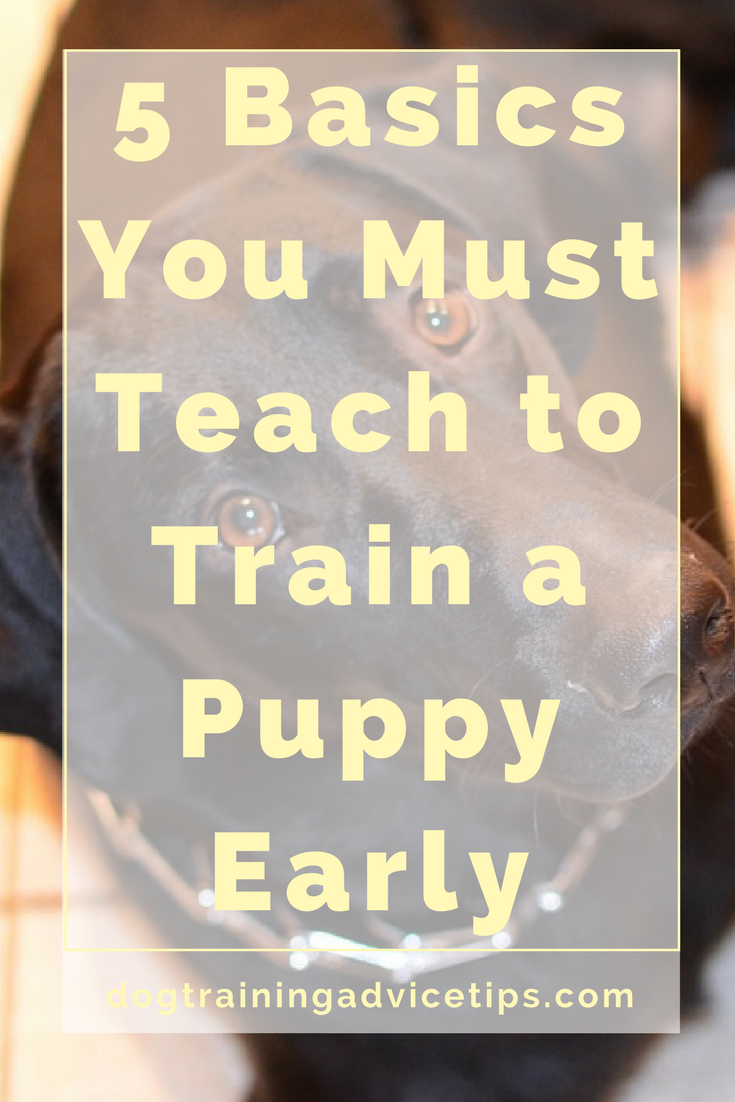 How Early Can You Start Dog Training
