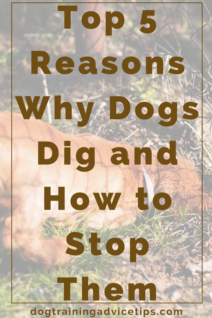 how to make a dog stop digging