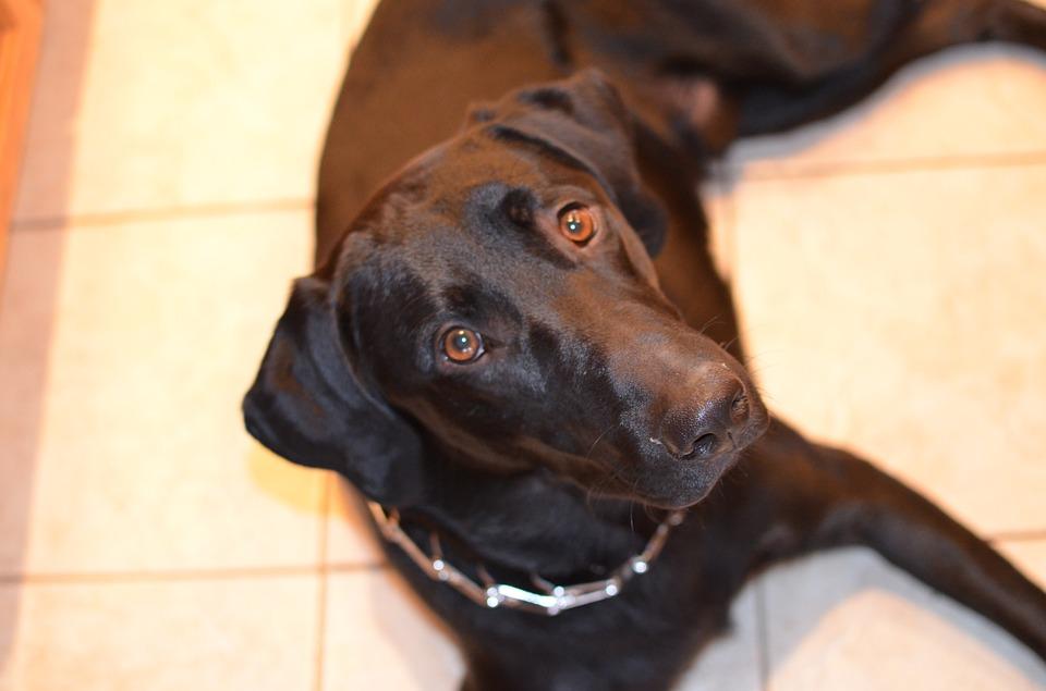 Aoc Dog Training